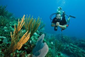 diver at ocean with marine fauna